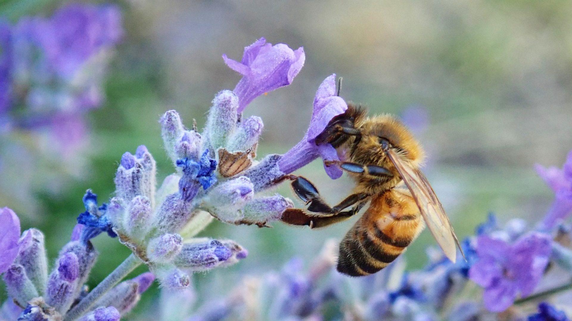 BienenschutzRegion-Stiefingtal